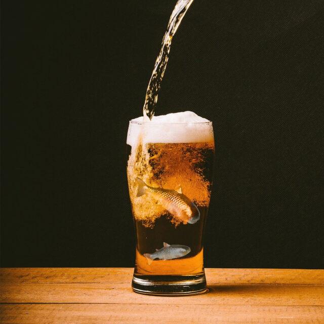 Isinglass cervesa vegana ecològica gluten-free ecofeminista